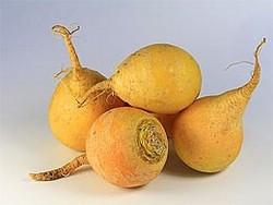 Репа — витаминная русская картошка